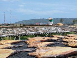 Proses Pembuatan Ikan Asin Di Pantai Timur Pangandaran