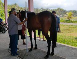 Kejurnas Pacuan Kuda Seri 2 Tahun 2021 Segera Digelar Tanpa Penonton Di Pangandaran