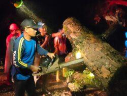 Diguyur Hujan Deras, Pohon Tumbang Halangi Jalan Nasional Di Pangandaran
